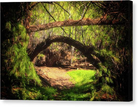 A Secret Passage Canvas Print