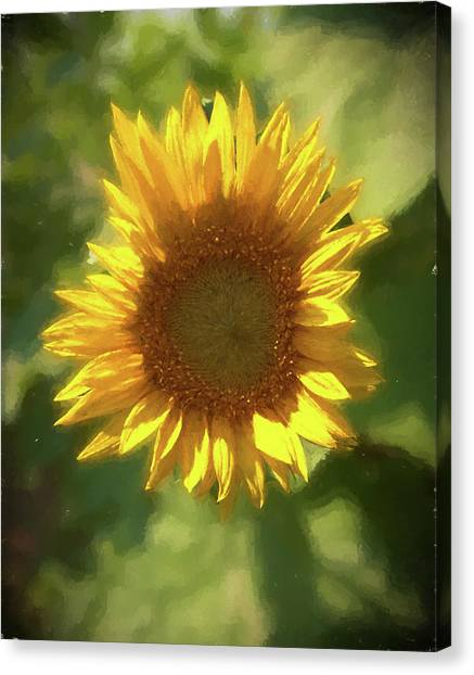 A Single Sunflower Showing It's Beautiful Yellow Color Canvas Print