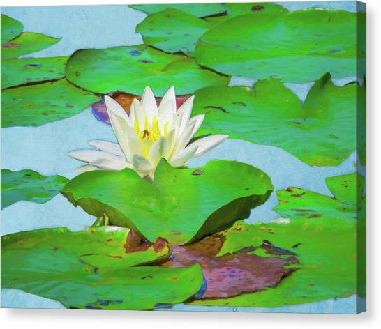 A Single Water Lily Blossom Canvas Print
