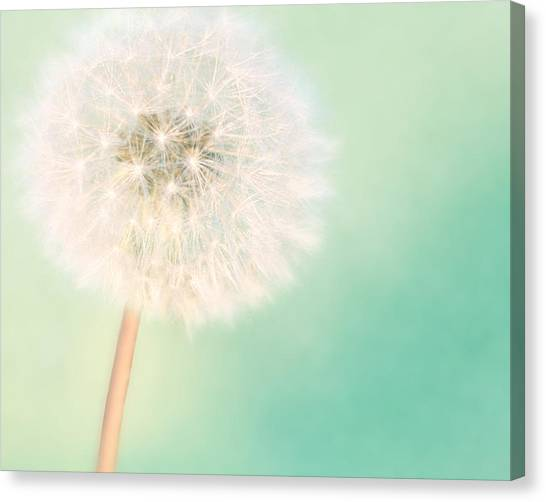 A Single Wish II Canvas Print