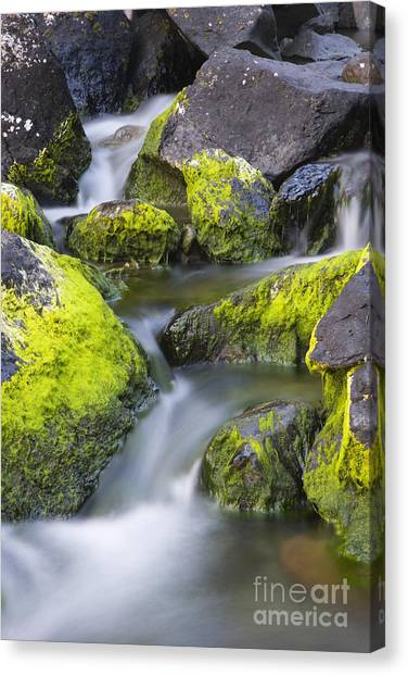 A Small Stream Canvas Print by Tim Grams