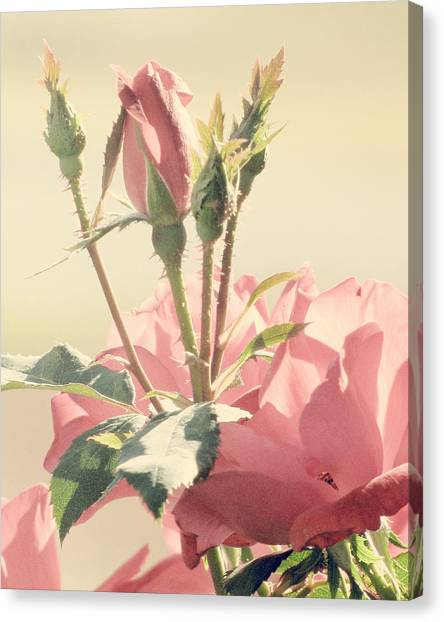 Rose Canvas Print - A Soft Sweet Note by Amy Tyler