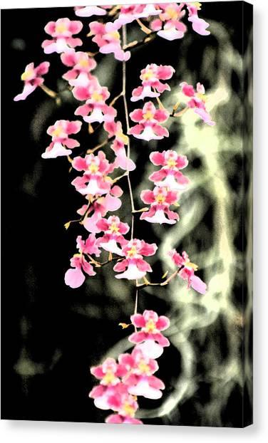 A Splash Of Pink Canvas Print by Nanette Hert