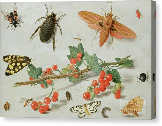 Magpies Canvas Print - A Sprig Of Redcurrants With An Elephant Hawk Moth, A Magpie Moth And Other Insects, 1657 by Jan Van Kessel