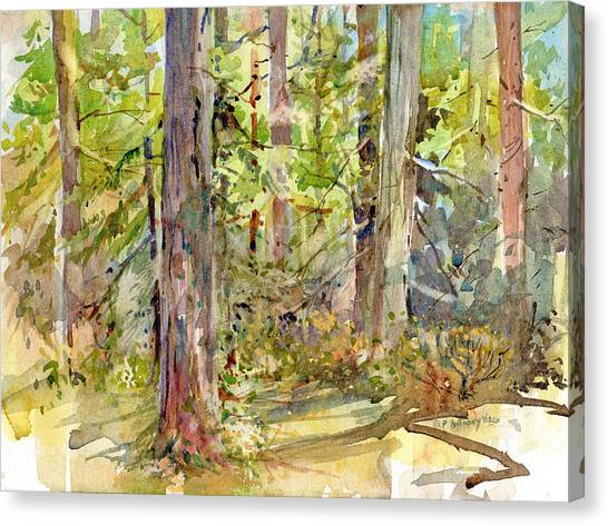 A Stand Of Trees Canvas Print