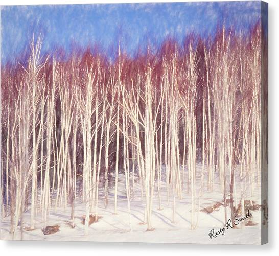 A Stand Of White Birch Trees In Winter. Canvas Print