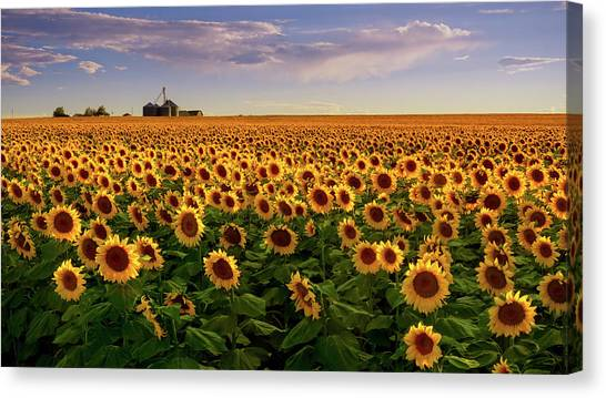 A Summer Evening In Rural Colorado Canvas Print