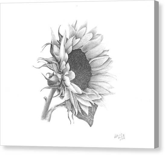 A Sunflowers Beauty Canvas Print