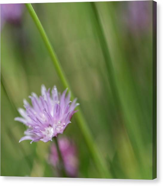 A Taste Of Spring Canvas Print