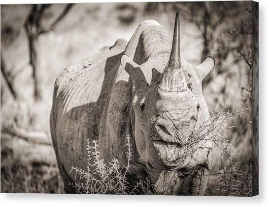 Rhinoceros Canvas Print - A Tasty Thornbush - Black And White Rhinoceros Photograph by Duane Miller