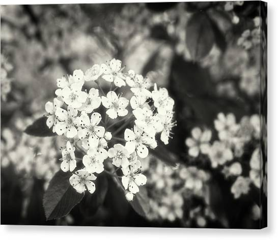 A Thousand Blossoms In Sepia 3x4 Flipped Canvas Print