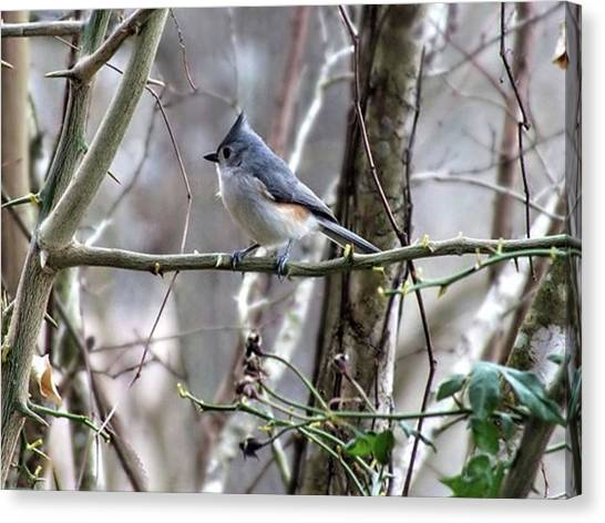 Titmice Canvas Print - A Titmouse In My by Cheray Dillon