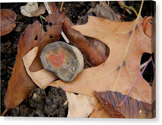A Token Heart Canvas Print by Shannon Guest