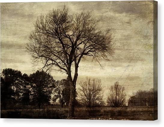 A Tree Along The Roadside Canvas Print