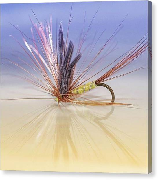 Fishing Canvas Print - A Trout Fly (greenwell's Glory) by John Edwards