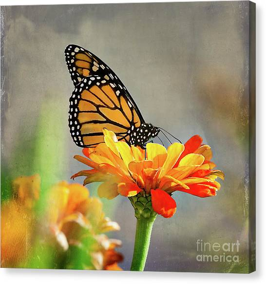 A Very Late Visitor To The Garden Canvas Print