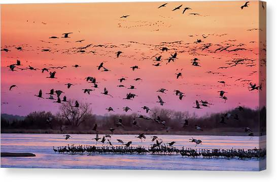 A Vibrant Evening Canvas Print