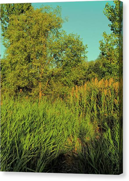 A Walk Amongst The Reeds Canvas Print