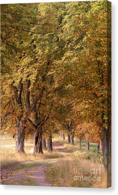 A Walk In The Countryside Canvas Print