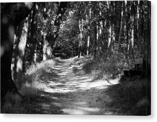 A Walk In The Woods Canvas Print by Edward Myers