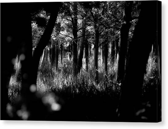 Canvas Print featuring the photograph A Walk In The Woods by Jeremy Lavender Photography