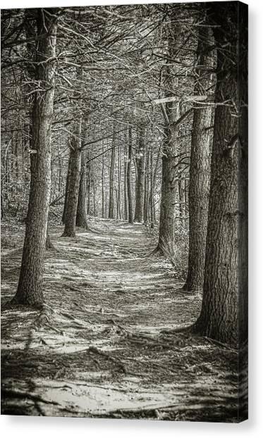 A Walk In Walden Woods Canvas Print