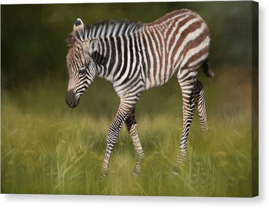 Zebras Canvas Print - A Walk On The Wild Side by Donna Kennedy
