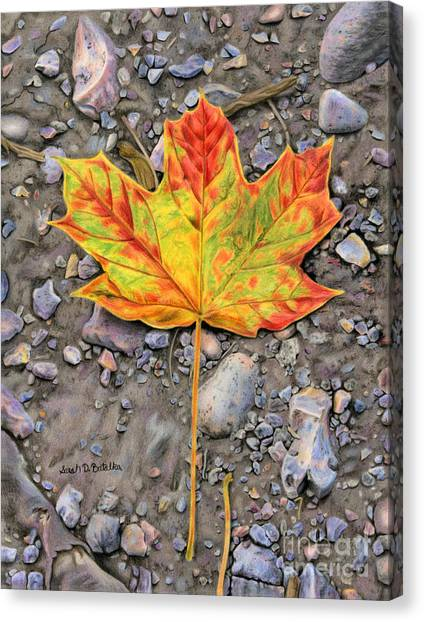 Maple Leaf Art Canvas Print - A Walk Through The Woods by Sarah Batalka