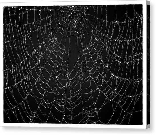 A Web Of Silver Pearls Canvas Print