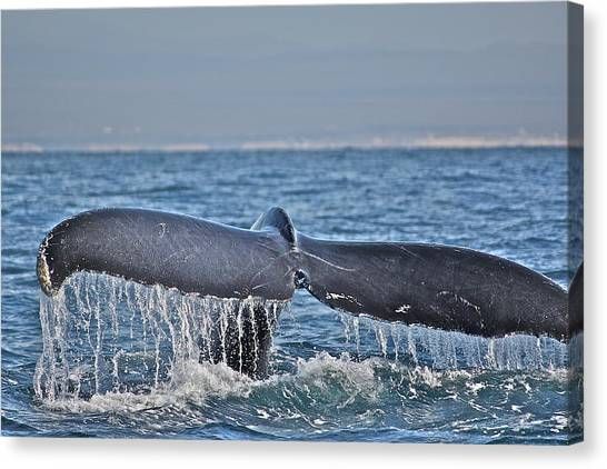 A Whale Of A Tale Canvas Print
