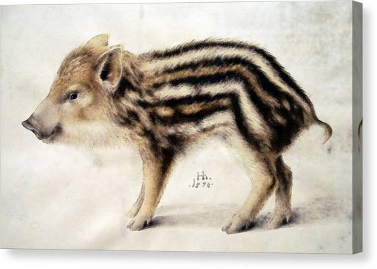 A Wild Boar Piglet Canvas Print
