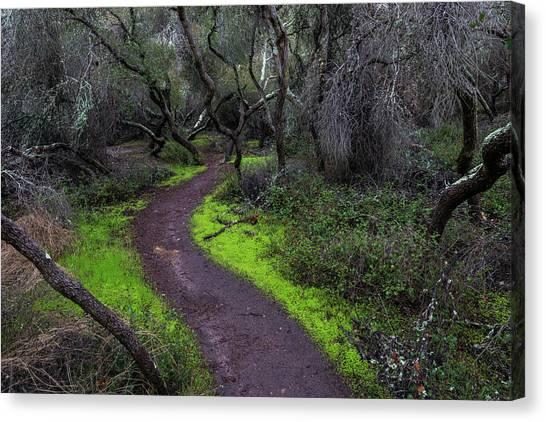 A Windy Path Canvas Print