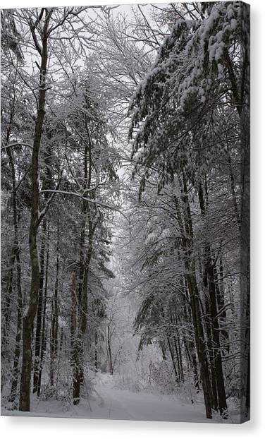 A Winters Path Canvas Print