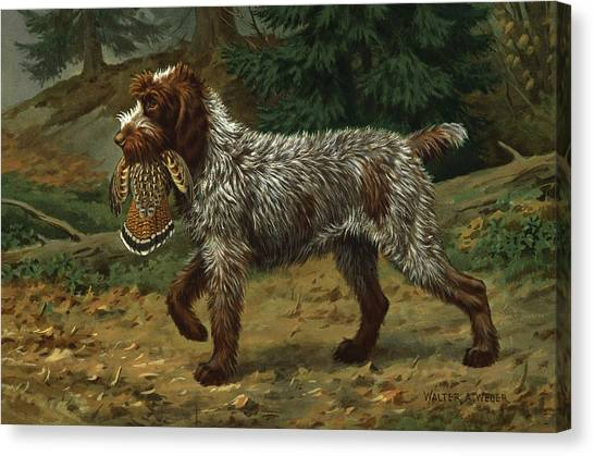Griffons Canvas Print - A Wire-haired Pointing Griffon Holds by Walter A. Weber