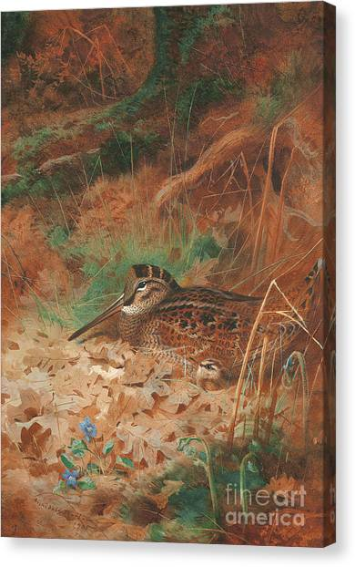 Woodcock Canvas Print - A Woodcock And Chick In Undergrowth by Archibald Thorburn