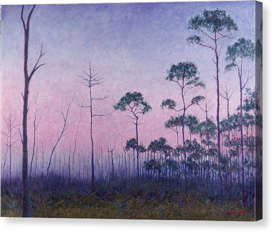 Abaco Pines At Dusk Canvas Print