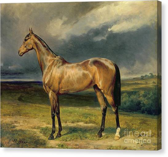 Race Horses Canvas Print - Abdul Medschid The Chestnut Arab Horse by Carl Constantin Steffeck