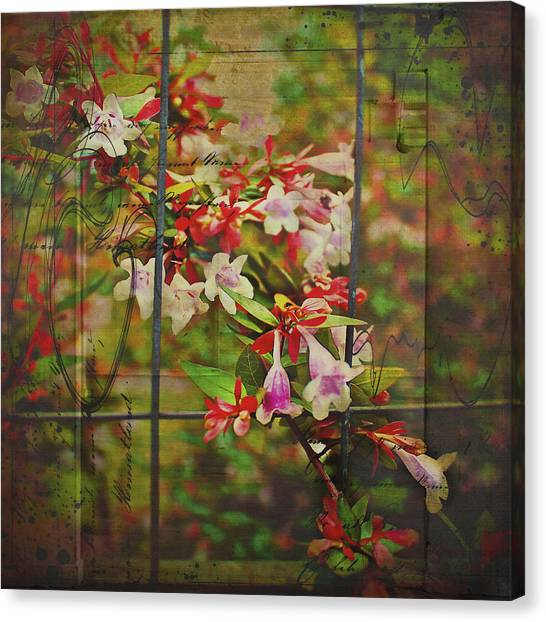 Abelia Coming Through Canvas Print