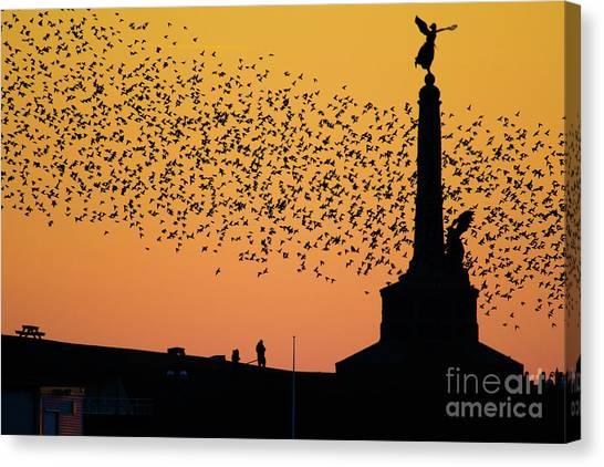 Aberystwyth Starlings Canvas Print