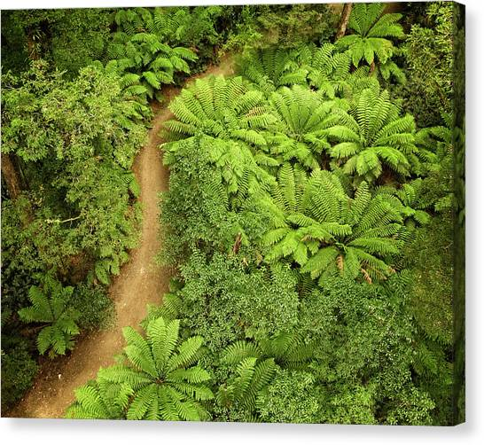 Great Otway National Park Canvas Print - Above The Forest by Catherine Reading