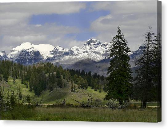Absaroka Mts Wyoming Canvas Print