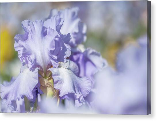 Absolute Treasure 1. The Beauty Of Irises Canvas Print