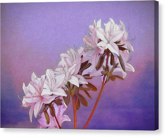 Delaware Canvas Print - Abstract Azaleas by Tom Mc Nemar