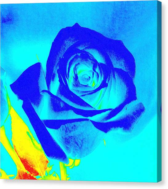 Single Blue Rose Abstract Canvas Print
