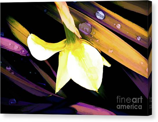 Abstract Daffodil And Droplets Canvas Print