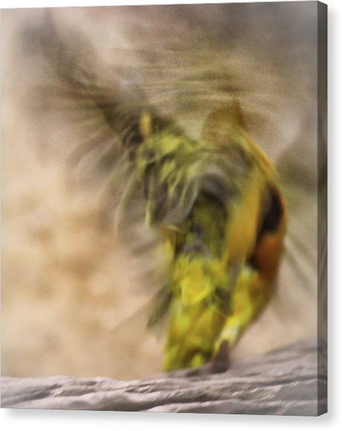 Finches Canvas Print - Abstract Finch by Martin Newman