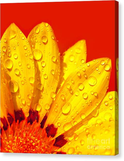 Abstract Flower Petals Canvas Print