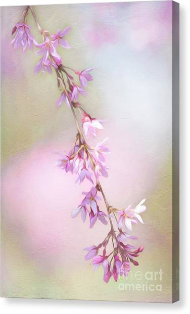 Abstract Higan Chery Blossom Branch Canvas Print