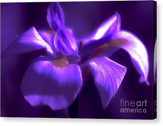 Abstract Iris Canvas Print