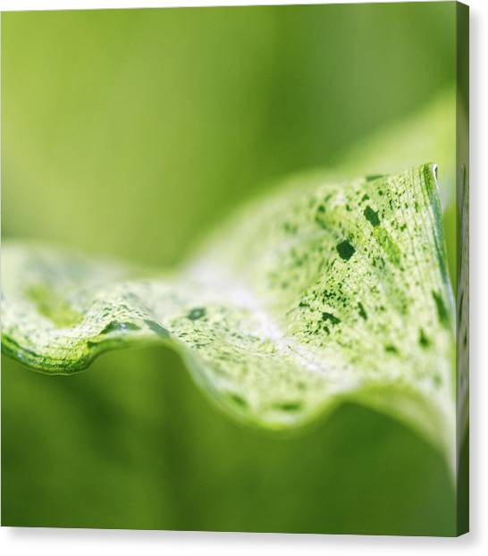 Leaves Canvas Print - Abstract Leaf by Julie Rideout